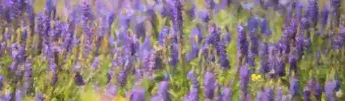 Purpleish